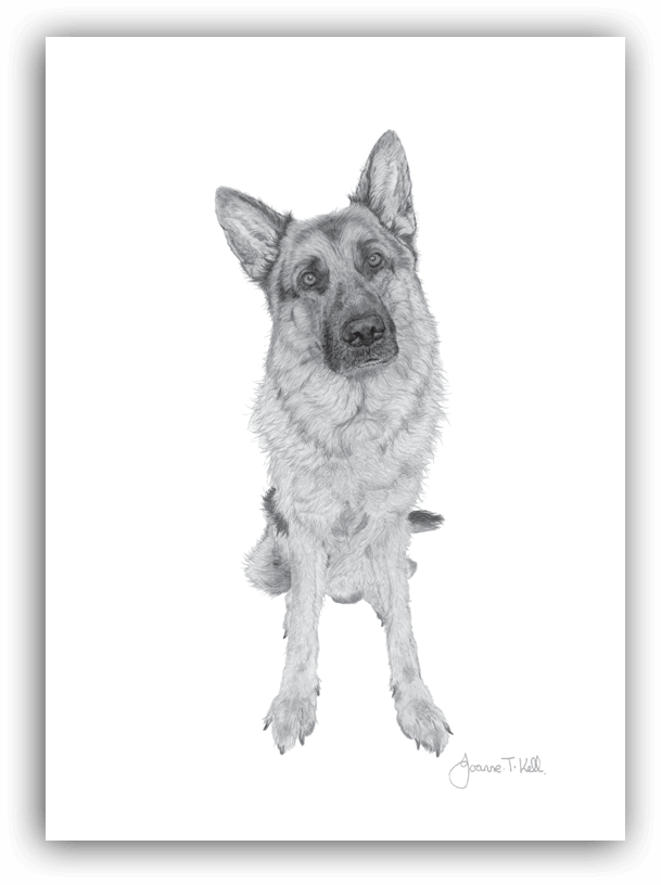 Dog greeting cards supplied wholesale by joanne t kell wildlife wholesale dogs greeting cards m4hsunfo