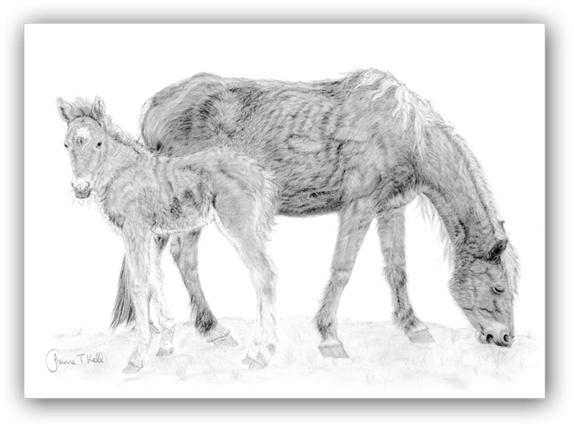 Large Wildlife Cards Dogs Cats Pencil Drawings By Joanne T Kell